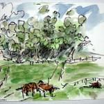 jwsc_landscapes_horsesonfarm_52000