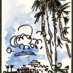jwsc_landscapes_wc_naples fl 10-02 single palm
